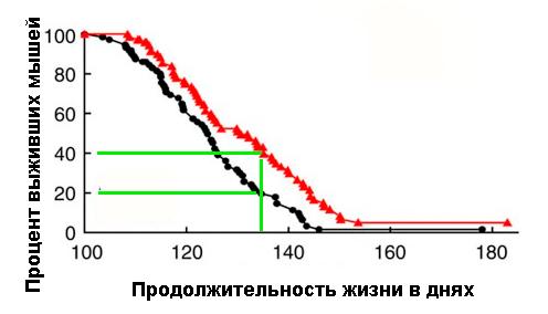 Глюкозамин увеличивает продолжительность жизни